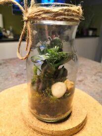 Plant terrarium in reused jar
