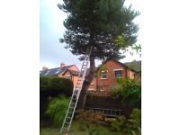 TREE SURGEON/POWER-WASHING/GUTTERS CLEARED/LEAVES CLEARED. -Denis- 07340-357-323