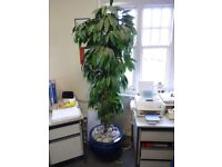 Large artificial tree/plant