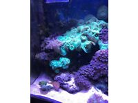Marine Tank Full Set Up Plus Equipment