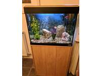 Tropical fish tank with stand, fish and accessories