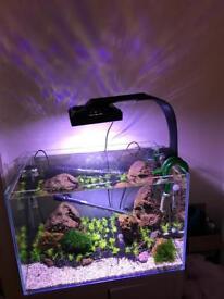 Ecotech Radion Freshwater LED aquarium light