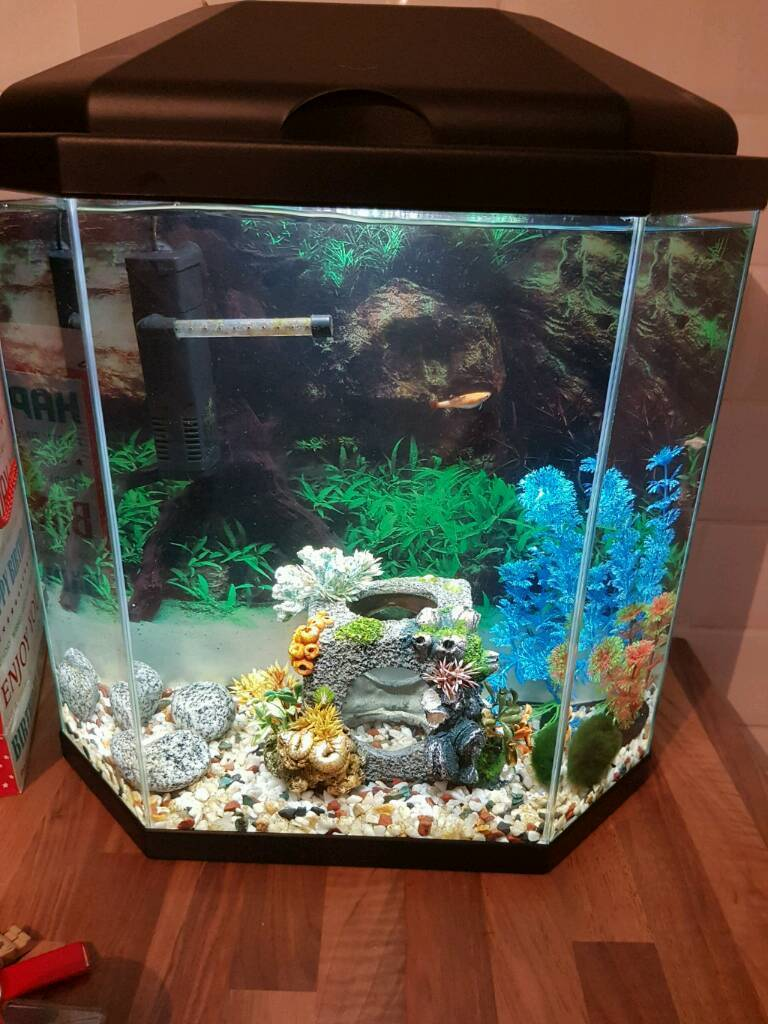 Pictures Of Cold Water Fish For Aquariums 1000 Aquarium