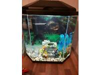 Ciano 25L Temperate/cold water fish tank, aquarium, complete set up