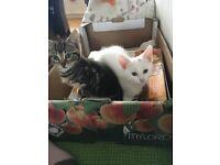 2 Gorgeous Adorable Kittens