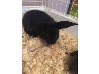 One baby rabbit left.