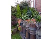 Reclaimed Chimney pot. Tall with crowns not broken off.