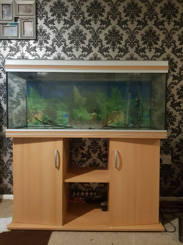 Large fish tank for sale | in Llanedeyrn, Cardiff | Gumtree