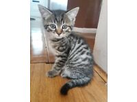 Stunning Bengal kittens ready to leave now