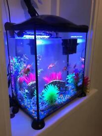 Fish tank 17 litter
