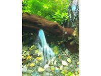 Wanted juwel vision 450 fish tank black