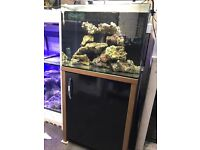 Aqua one 130 marine fish tank Aquarium with full set up
