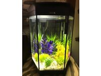 60ltr Fish Tank for sale inc plants, sand and gravel.