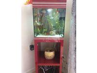 Askoll aquarium for sale