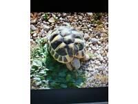 Missing Tortoise