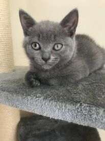 Kittens for sale (only 1 left)