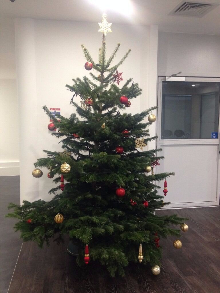 Premium Christmas Tree (Nordmann Fir) **DELIVERED** | in Clapham ...