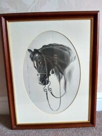 BEAUTIFUL HORSE PICTURE / EQUINE STUDY / FRAMED /