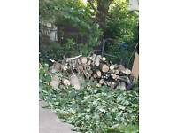 Sycamore logs 4ft in length