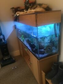 4 foot fishtank, stand, tank and lid only