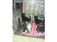 Kittens looking for there forever homes