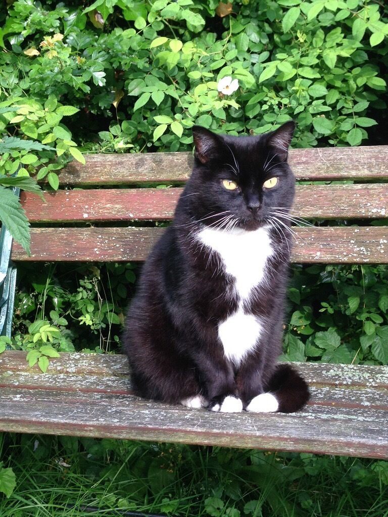 Missing Black & White Male Cat