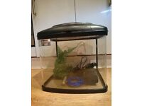 Fishpod 64l fish tank