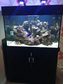 Aqua one 300 black marine tropical fish tank aquarium with setup