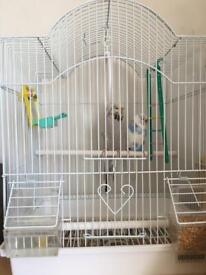 2 Pair of budgies& cage £30 each ,