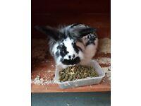 Girl bunnie