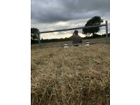 Small bales of hay for sale