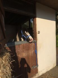 Used Wooden Stables