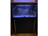 Fluval Roma black 125 tropical marine fish tank Setup aquarium (delivery installation)