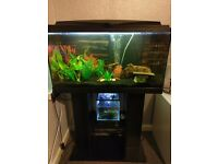 2.5FT fish tank with stand & 5L fish tank