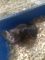 FREE kittens need rehoming asap