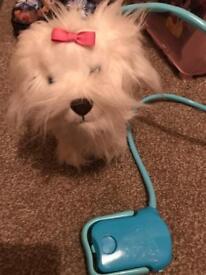 Fluffy goes walkies dog