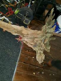 Large peice of drift wood