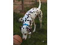 House trained fully vaccinated flead wormed and chipped