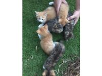 6 adorable kittens for sale