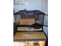 Royal python snake & tank