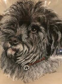 "Lovely Original Chalk or Pastel REDUCED FOR QUICK SALE Portrait of a Cairn Terrier signed ""BT 2016"""