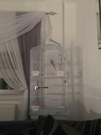 Budgie with cage and stand