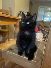 Kittens for sale ( read advert please !)