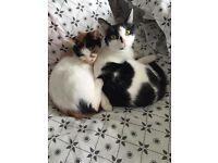 2 female kitties free to a good home