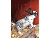 Lovely rabbit 3 months