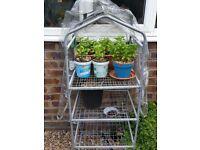 Greenhouse (132x50x45cm)