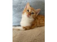 beautiful kittens looking for a forever home