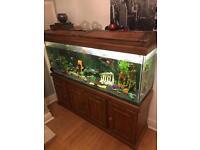Fish tank 6 foot