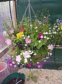 Hanging Baskets, plants etc