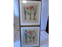 Pair of Vintage Framed Large Botanical Prints of Spring Bulbs. Green Gloss Wood Frames.